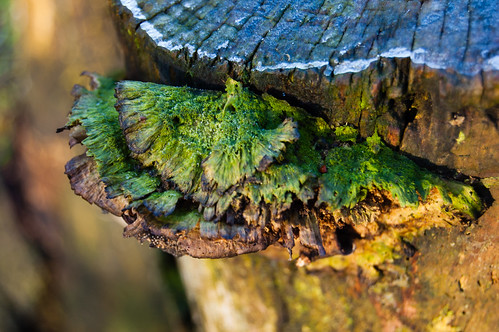 Moss-covered bracket fungus