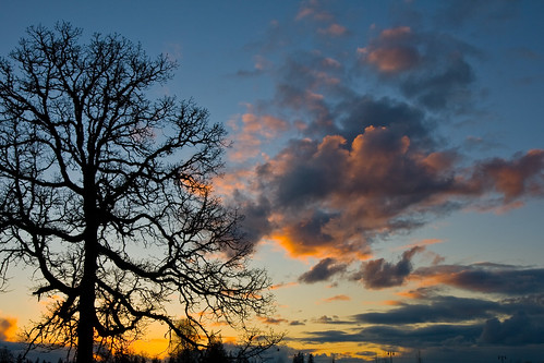 winter sunset sky clouds oaktree