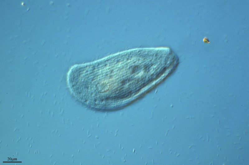 DIETA BACTERIANA by PROYECTO AGUA** /** WATER PROJECT