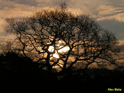 tree silhouette swansea sunrise singletonpark