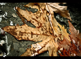 Fall feeling #2