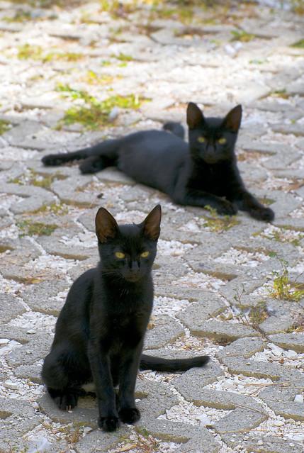 Cats of Postira (4)