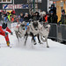 Reindeer race, Tromsø / Norway