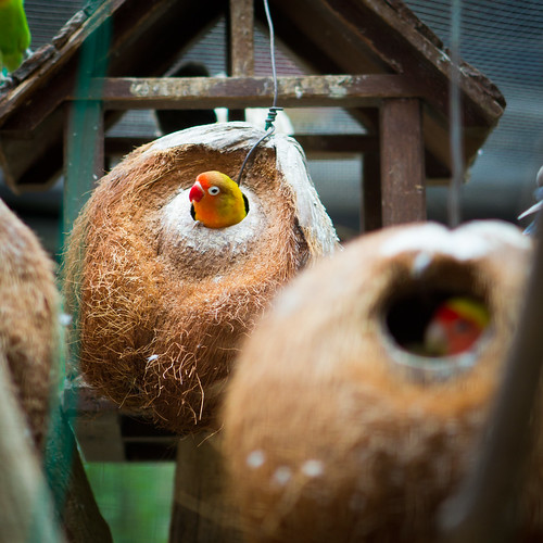 Coconut Bird House / SML.20110202.7D.07198 | by See-ming Lee (SML)