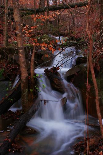 plants water leaves creek waterfall rocks stones alabama tuscaloosa lakeharris tuscaloosaalabama