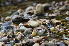 Shallow Creek of Rocks