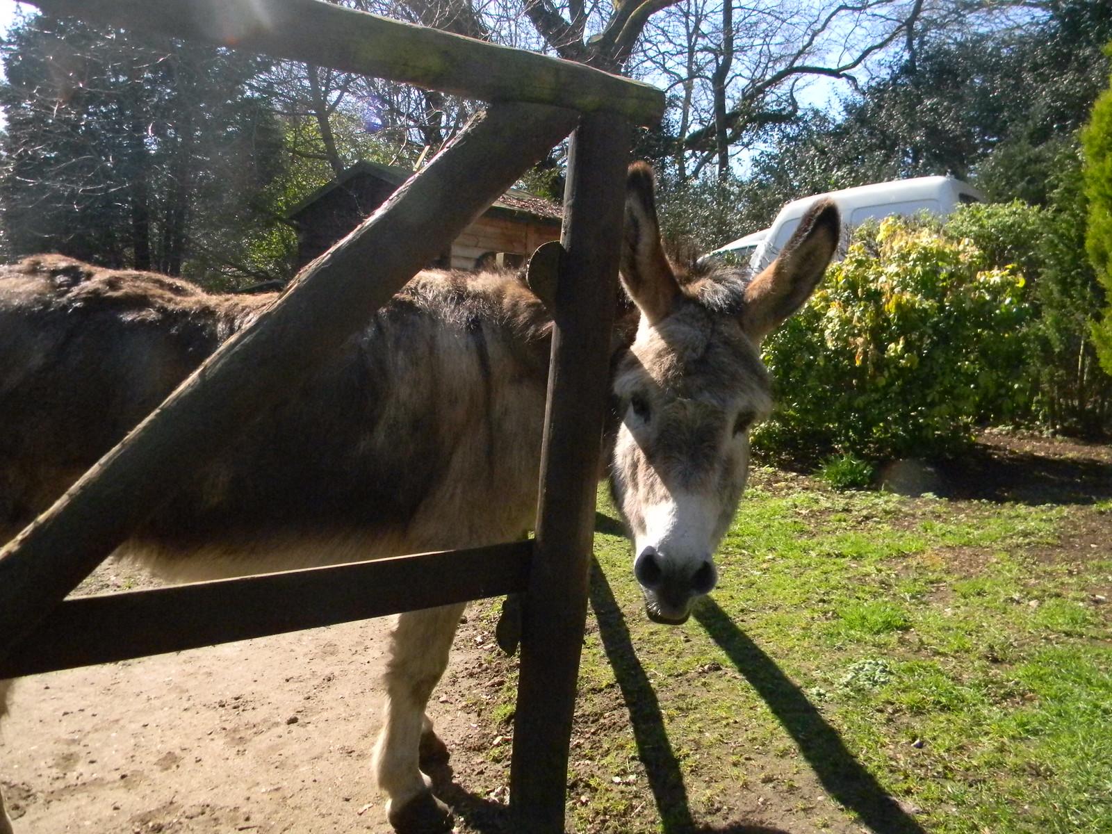 Donkey donkey Farnham to Godalming. The pub The Donkey has several donkeys in the beer garden