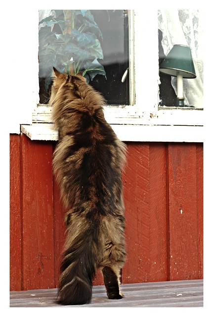 Hey! Neighbour is watching football......