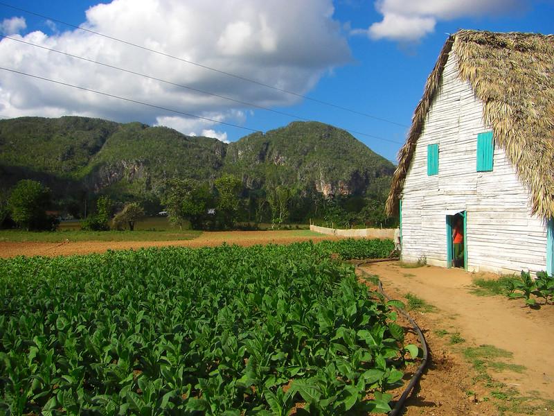 Viñales Valley - Tobacco Plantation