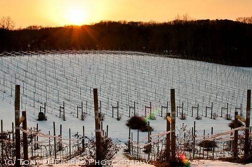 usa snow nature weather virginia vines farm rows va lensflare dcist rays posts sunrisesunset treeline vawinecountry potomacpointwinery nikon3518