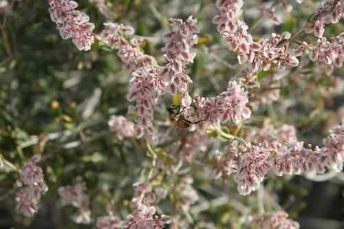 Flowers with bee, near Tamga | by Trina Isakson