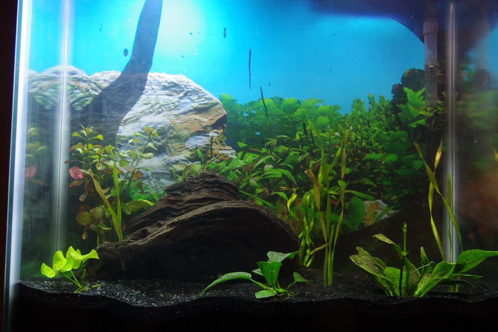 29/365 Water Garden