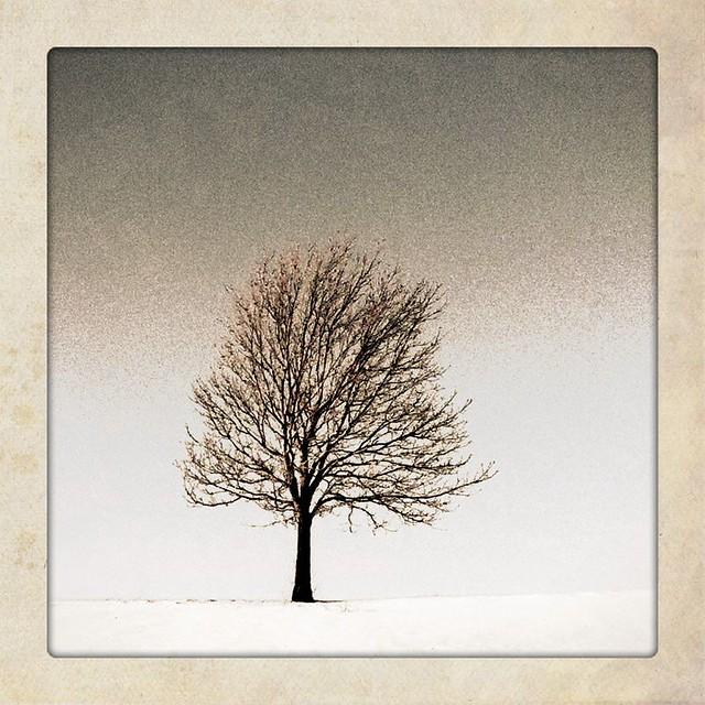 Tree v5