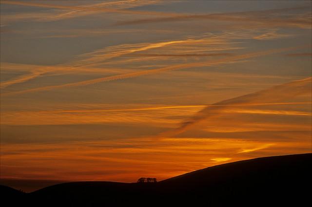 ox close sunset