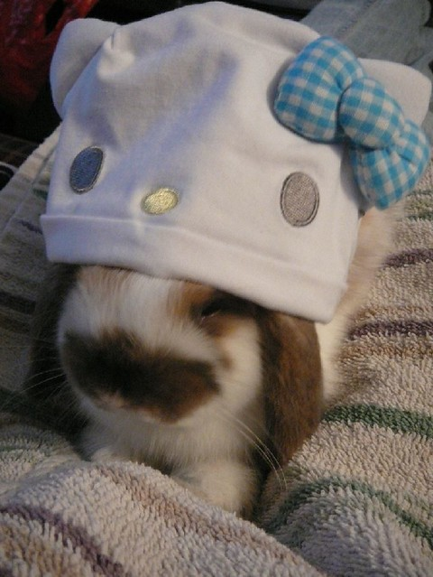 my sweet baby bunny