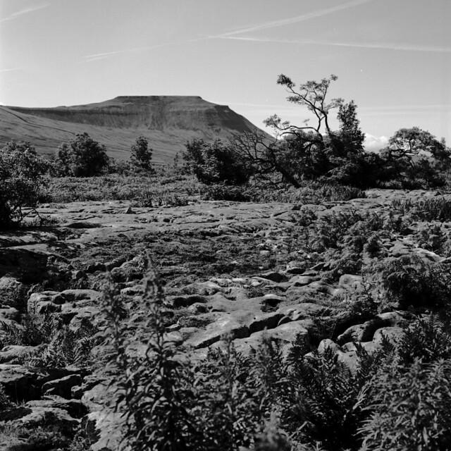 Yorkshire - Scar Close - view to Ingleborough