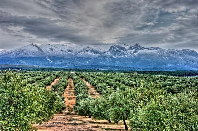 Sierra Arana2