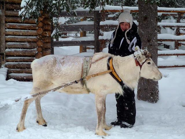 Petting a reindeer in Helsinki