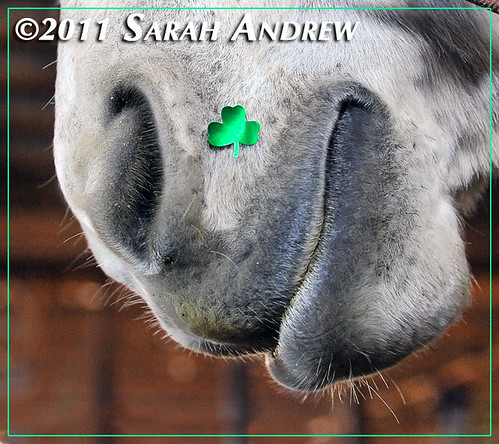 May the luck o' the Irish be with you... | by Rock and Racehorses