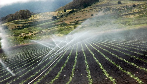 Spray irrigation of fields, mists, rows of plants, Half Moon Bay, San Mateo County, California, USA | by Wonderlane