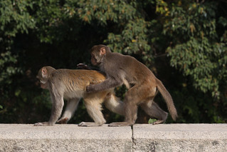 Anyone know how to monetize monkey porn?   Kam Shan Country …   Flickr
