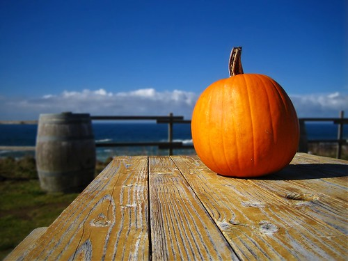 pumpkin picnic table pacific coast highway route 1 wine barrel star winery pacificstarwinery