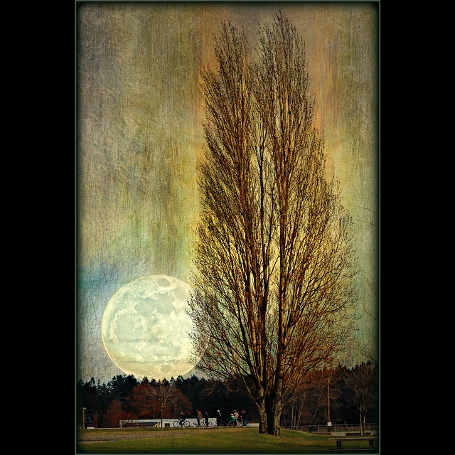 ode to a supermoon . . .