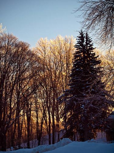 ri winter sky usa tree ice sunrise dawn newengland rhodeisland flowersplants pascoag burrillville 02859