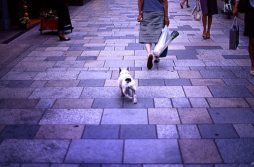 The Dog with his keeper   by nino**