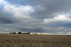 Zielonki koło Krakowa   by Kali187