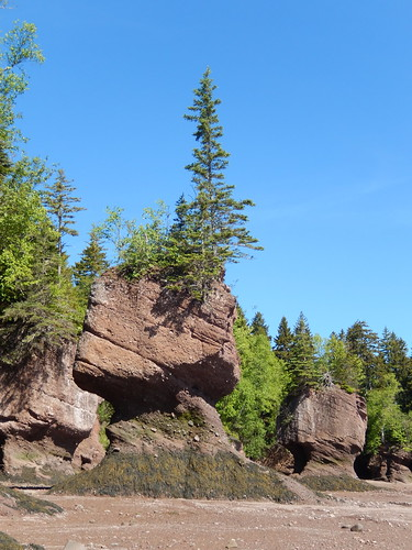 Hopewell Rocks - 6