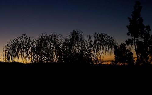 california blue sunrise palmtree 2470mm trabucocanyon f28l cotodecaza canon1dmarkiii