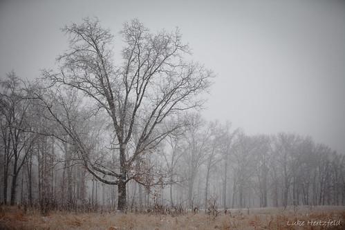 sky snow tree ice grass oak windy snowing oakopeningsmetropark oakopeningspreserve