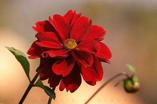 Red,, | by Arif hussain95