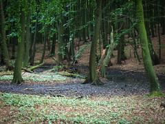 Nationalpark Jasmund: Moor