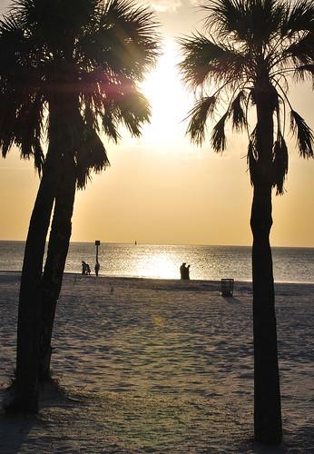 ocean sunset sea sun tree beach gulf florida palm clearwater