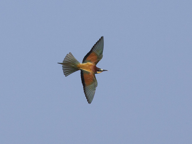 Birds in Morocco and Western Sahara