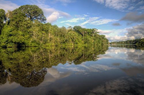 amazon forest reflections   by mariusz kluzniak