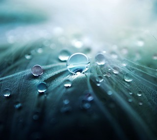 Waterdrops | by victoria white2010