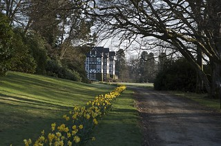 Gregynog and daffodils 2 | by Plashing Vole