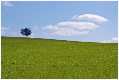 The Tree on the Hill  (EXPLORE) | by Bert Kaufmann
