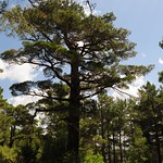 Small patch of forest near Findikli, Adana Province