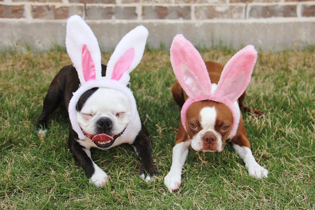 not so happy bunnies