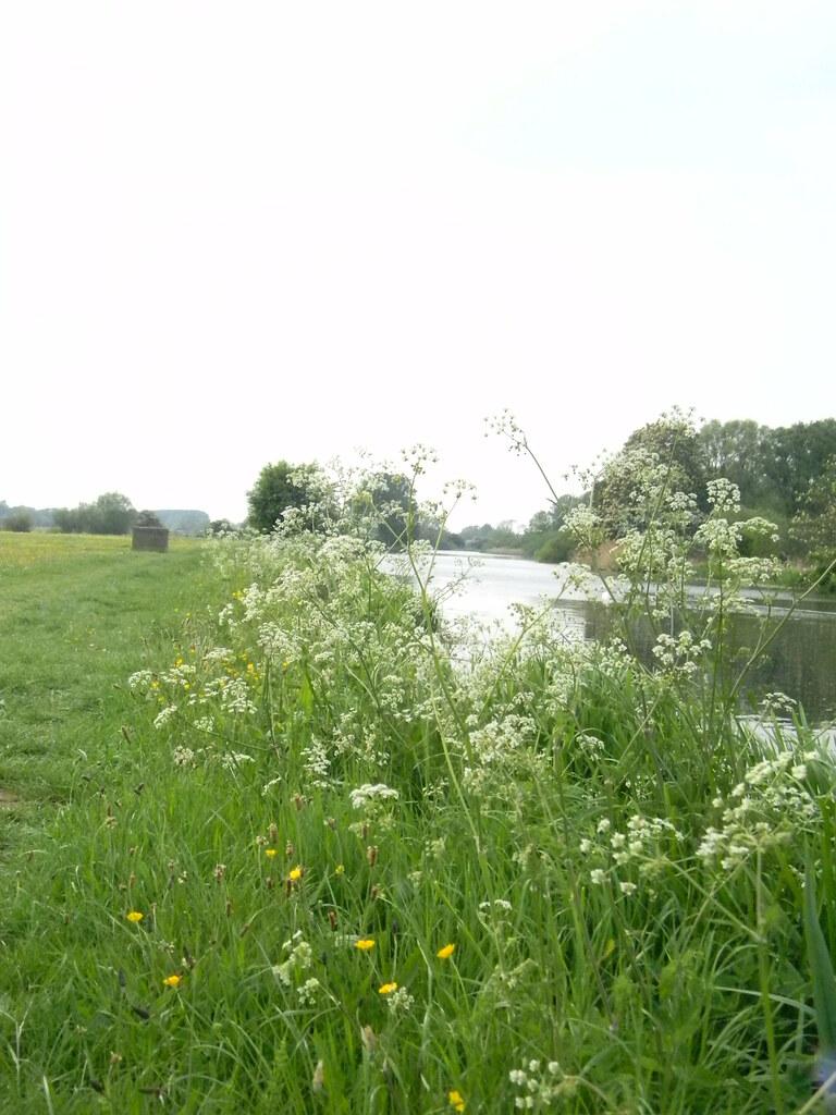 Water scene Huntingdon Circular