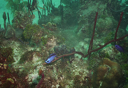 dive-shop-venice-englewood-florida-scuba-diving-photos-dom ...
