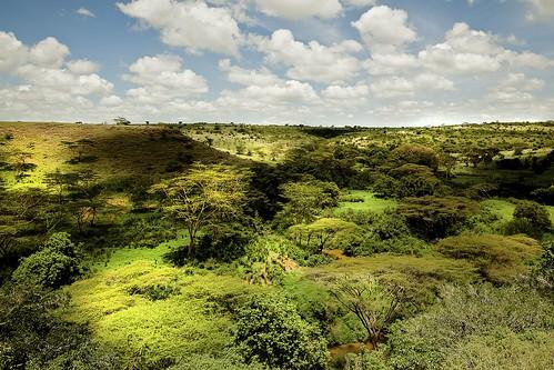 africa trees wild sunlight green animals clouds landscape day shadows cloudy kenya nairobi safari jungle rivers lush dappled hippos baboons