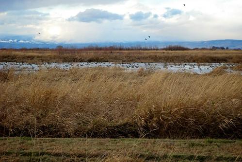 travel water birds washington toppenish
