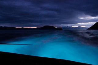 Bioluminescent Plankton | by Tuggerdave 
