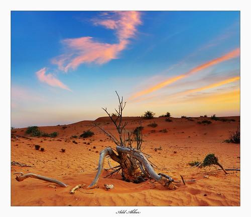 sunset clouds sand deadtree sharjah nikon18200mmvr nikond90