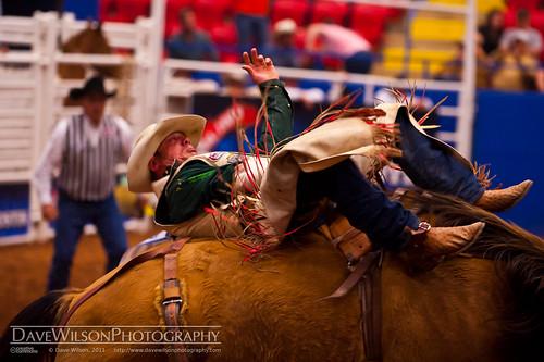 horse austin bareback texas tx rodeo bronco rider rodeoaustin